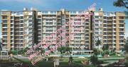 TDI Wellington Heights Mohali - Chandigarh - Houses - Apartments @Sanj
