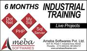 6 Months Training + Project Certificate By Ameba