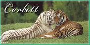 Jim Corbett Packages,  Jim Corbett national park,  jim corbett national park resorts