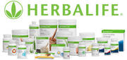 herbalife distributor in jind
