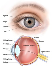 A Briefing on Ophthalmology | Eye Care at A Glance