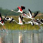6.	Bharatpur Weekend Tour frm Delhi
