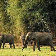 •Beauty of Kerala Tour