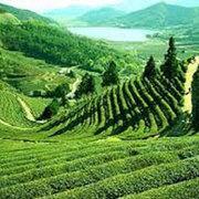 •Gangtok - Lachen - Lachung - Gangtok - Pelling - Darjeeling Tour Pac