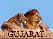 Gujarat tour packages,  Travel booking gujarat