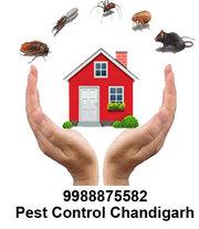 Pest control Zirakpur