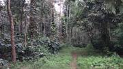 Coffee estate for sale in sakleshpur