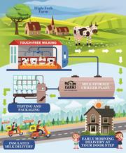 Organic farm fresh pure cow milk near you